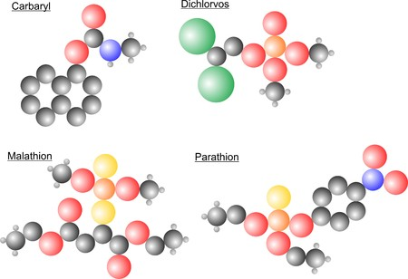 herbicide: The atomic arangment in the molecules of different pesticides with parathion, dichlorvos, carbaryl and malathion.