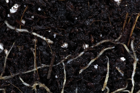 A macro photo of roots in brown garden soil. Reklamní fotografie