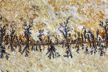 carbonate: Dendritic minerals  of iron- and manganese oxides on a carbonate rock surface.