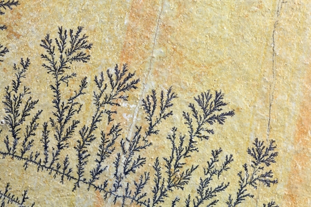 dendrites: Dendritic minerals  of iron- and manganese oxides on a carbonate rock surface.