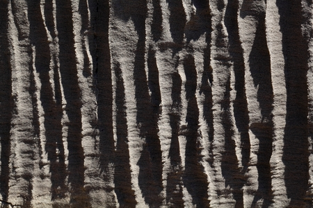 tertiary: Surface of carbonate rock with weathering structures (micro karst), Tertiary age from Italy.