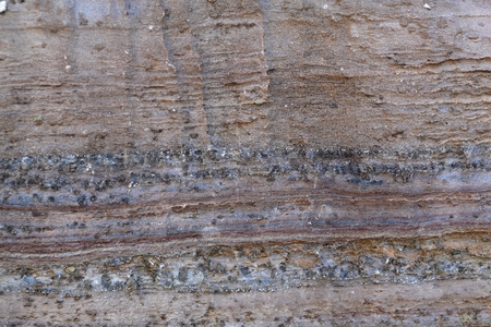 weathering: Surface of carbonate rock with weathering structures (micro karst), Tertiary age from Italy.