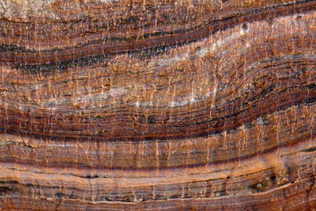 Surface of carbonate rock with weathering structures (micro karst), Tertiary age from Italy.