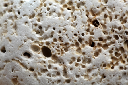 organisms: Surface of a carbonate rock with boring traces of organisms.
