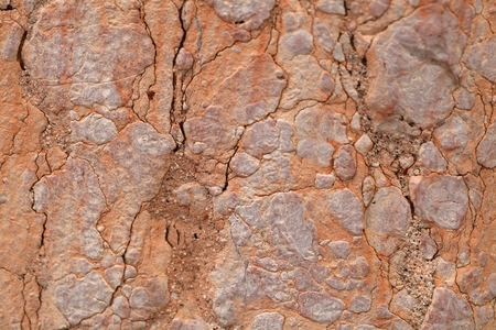 mineralogy: The surface of red nodular limestone of Triassic age from Italy. Stock Photo