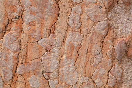 nodular: The surface of red nodular limestone of Triassic age from Italy. Stock Photo