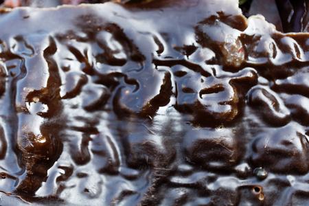 Macro photo of the surface of sugar kelp (Saccharina latissima), a brown algae. Stock Photo