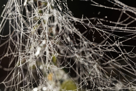 Spider webs with dew drops in sunshine.