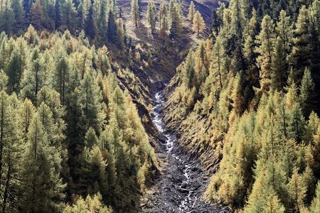 Larch forests in the Alps in the late autumn.