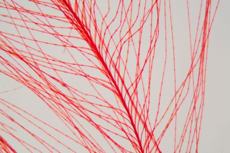 Detail of a red bird feather under the microscope. Stock Photo