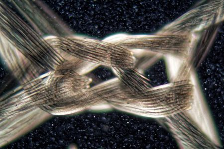 A knot of nylon fibers under the microscope and in polarized light. Stock Photo