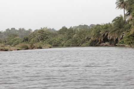 River scene in the Gambia, West Africa.