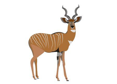 Illustration of a lesser kudu, Tragelaphus imberbis