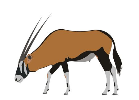 Illustration of a South African oryx, Oryx gazella Stock Photo