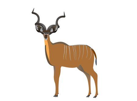 Illustration of a greater kudu, Tragelaphus strepsiceros