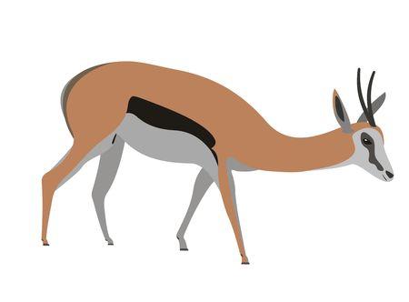 Illustration of a springbok, Antidorcas marsupialis