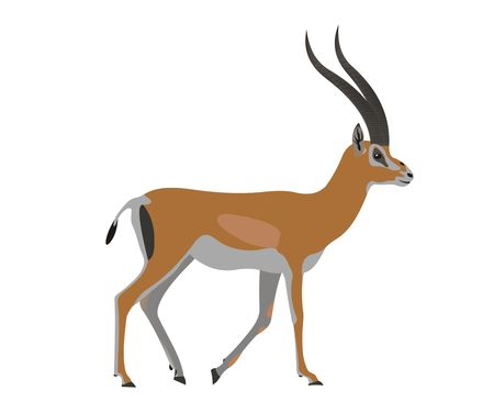 Illustration of a Grants gazelle, Nanger granti Фото со стока