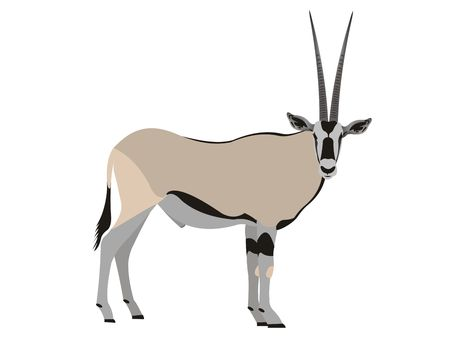 Illustration of an East African oryx, Oryx beisa Stock Photo