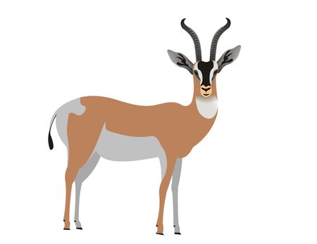 Illustration of a Soemmerrings gazelle, Nanger soemmerringii Stock Illustration - 120799100