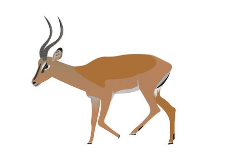 Illustration of a Black faced impala, Aepyceros melampus petersi