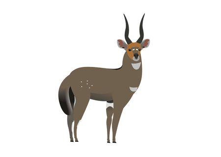 Illustration of a Meneliks Bushbuck, Tragelaphus seriptus meneliki Stock Illustration - 120799093