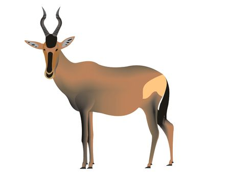 Illustration of a red hartebeest, Alcelaphus buselaphus caama