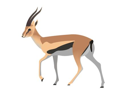 Illustration of a Thomsons gazelle, Eudorcas thomsonii Stock Photo