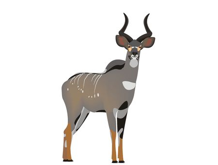Illustration of a mountain nyala, Tragelaphus buxtoni Stock Photo