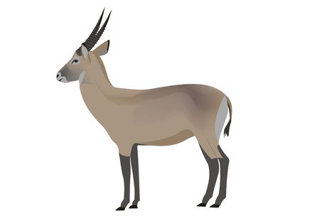 Illustration of a waterbuck antelope, Kobus ellipsiprymnus Stock Photo
