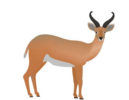 Illustration of a Bohor reedbuck, Redunca redunca Stock Photo