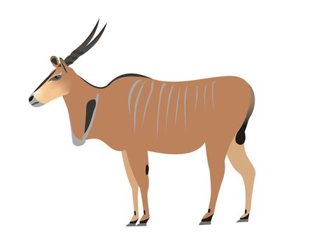 Illustration of a common eland, Taurotragus oryx Stock Photo