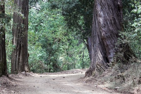 Way in the Menagesha Forest protection area in Ethiopia. Imagens