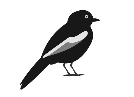 Illustration of a white-shouldered black tit, Melaniparus guineensis, isolated on white background. Stock Photo