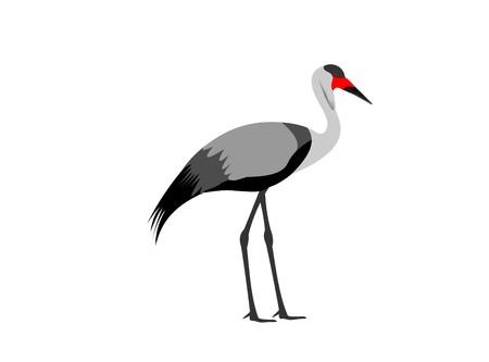 Illustration of a wattled crane, Bugeranus carunculatus, isolated on white background. Stock Photo