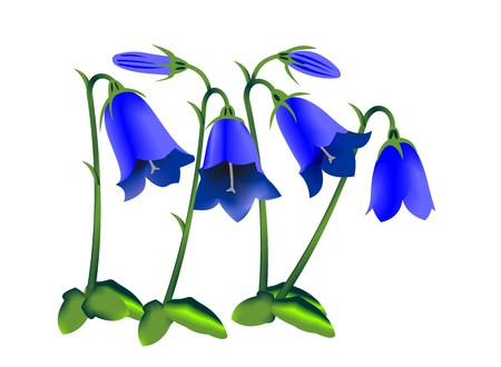 Illustration of an earleaf bellflower, Campanula cochleariifolia, isolated on white background. Stockfoto