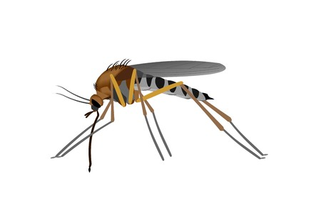 Illustration of a Mosquito, isolated on white background. Banco de Imagens