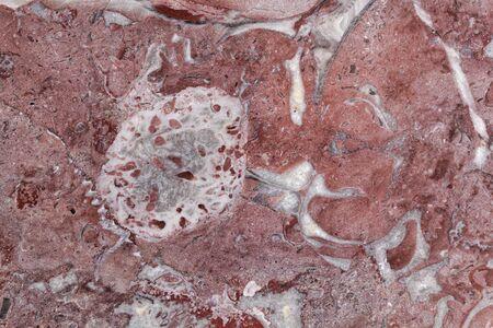 Die Oberfläche eines roten Kalksteins mit großen fossilen Fragmenten (Rudisten) aus der Kreidezeit, aus Frankreich.