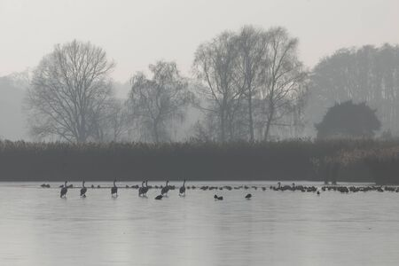 Foggy landscape with a frozen lake with swans and trees in the Mohrhof area in Bavaria, Southern Germany.