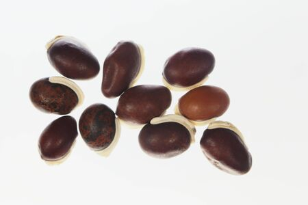 Beans of a winged bean, Psophocarpus tetragonolobus, with a white background 스톡 콘텐츠