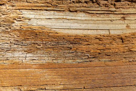 The surface of thin bedded layers of Posidonia Shale from the Lower Jurassic of Southern Germany. Standard-Bild