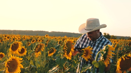 agronomist man osamatrivaet flowers and sunflower seeds. Businessman with tablet examines his field with sunflowers. agricultural business concept. farmer walks in a flowering field.