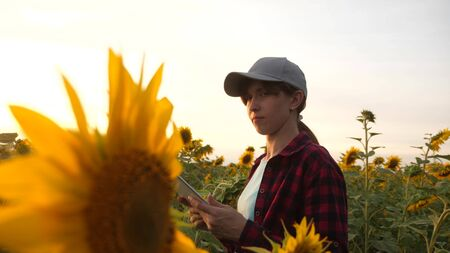 Happy farmer woman working with a tablet in a sunflower field in sunset. An agronomist studies a sunflower crop and laughs. business woman analyzes profit in the field.