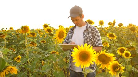 businessman in field analyzes their income. agronomist studies crop of a sunflower. A farmer man works with a tablet in a sunflower field in the rays of sunset. concept of farming and agriculture. Archivio Fotografico