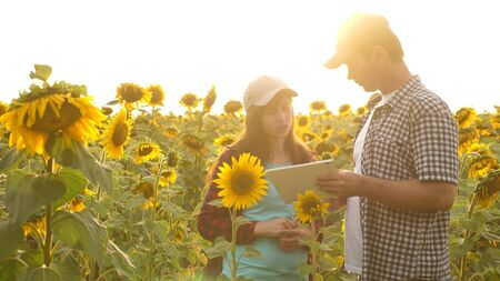 Man and woman farmers with a tablet work in the field with sunflowers. The concept of agriculture. agriculturist and farmer in the field.