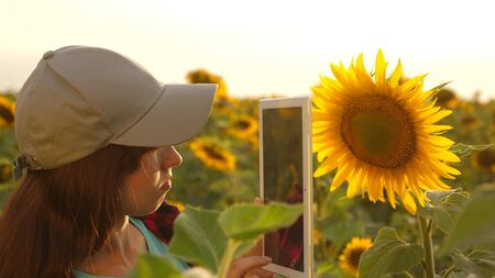 farmer woman working with tablet in sunflower field inspects blooming sunflowers. female agronomist is studying flowering of a sunflower. businesswoman in field planning their income. farming concept Archivio Fotografico