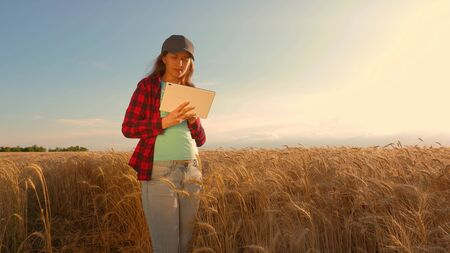 businesswoman with a tablet studies wheat crop in field. Farmer woman works with a tablet in a wheat field, plans a grain crop. business woman in field of planning her income. agriculture concept.