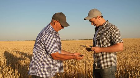 farmer and businessman with tablet working as a team in field. agronomist and farmer are holding a grain of wheat in their hands. Harvesting cereals. A business man checks the quality of grain.