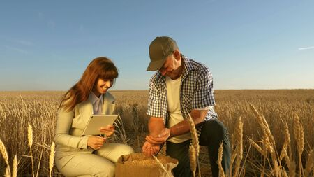 farmers and business woman teamwork in field. agronomist and farmer are holding a grain of wheat in their hands. Harvesting cereals. Businesswoman checks quality of grain. Agriculture concept. Standard-Bild - 131348342