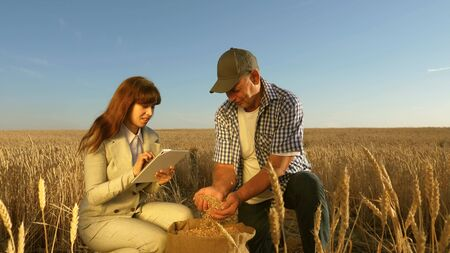 farmers and business woman teamwork in field. agronomist and farmer are holding a grain of wheat in their hands. Harvesting cereals. Businesswoman checks quality of grain. Agriculture concept. Standard-Bild - 131348346