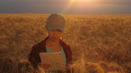 Mujer del granjero que trabaja con una tableta en un campo de trigo, a la luz del atardecer. mujer de negocios planea ganancias en un campo de trigo. Mujer agrónoma con una tableta estudia la cosecha de trigo en el campo. concepto de agricultura.